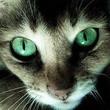 Smiler Cat