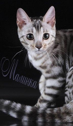 Малинка