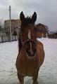 Зайка-Вятская лошадка