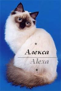 Алекса