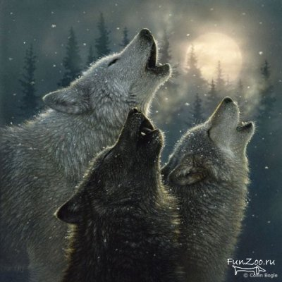 Akita Wolf13
