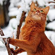 yellowmooncat