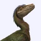 Raptor33