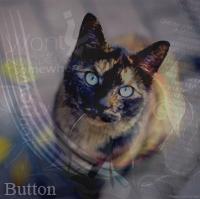 button;