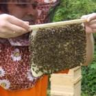Пчелолюб