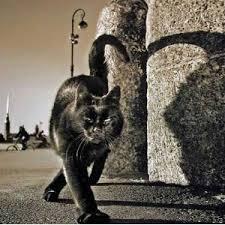 Чёрный кот Шурика