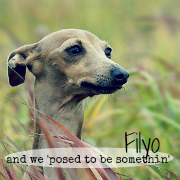 Filyo