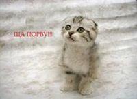 AlexeyZ